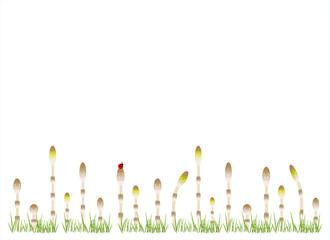 かわいい土筆の整列 緑の草付き