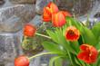 Tulpen vor einer Feldsteinmauer