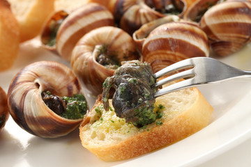 escargot, snails a la bourguignonne