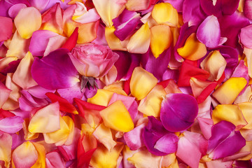 Rose petals. Abstract floral background.