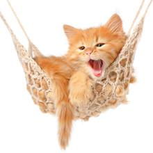 Słodkie rudowłosa kotka w hamaku
