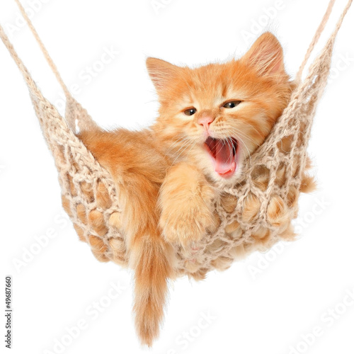 Keuken foto achterwand Kat Cute red-haired kitten in hammock