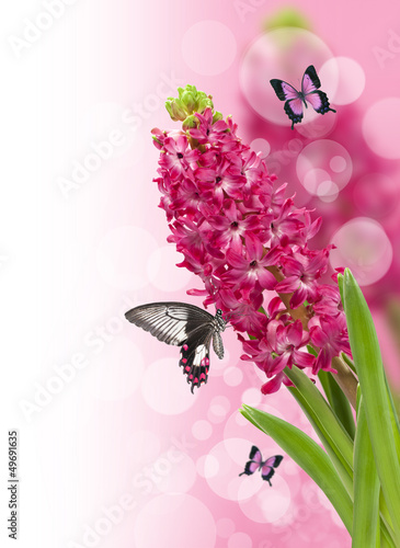 floral background with pink hyacinth