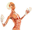alien musculatory sytem close up body