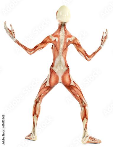 alien musculatory sytem back view