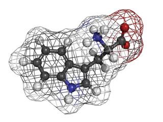 Tryptophan (Trp, W) amino acid, molecular model.