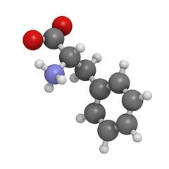 Phenylalanine (Phe, F) amino acid, molecular model.