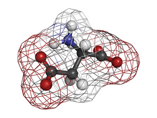 Aspartic acid (Asp, D, aspartate)amino acid, molecular model.