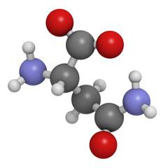 Asparagine (Asn, N) amino acid, molecular model.