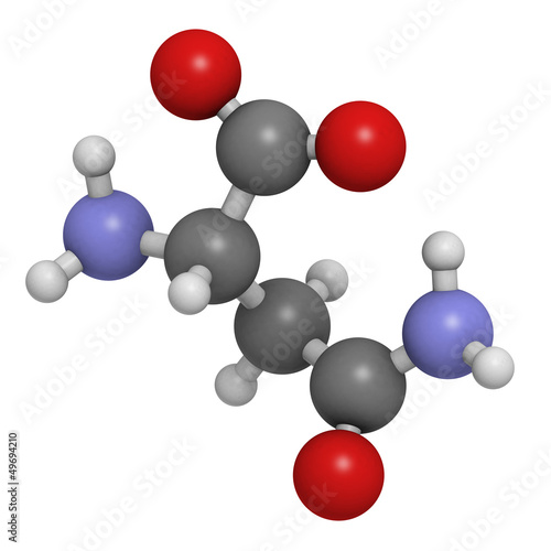 Asparagine (Asn, N) amino acid, molecular model.