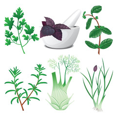 Set of herbs with mortar