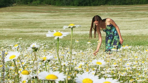 Woman picking chamomile for a bouquet