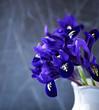 Spring iris flowers in a vase