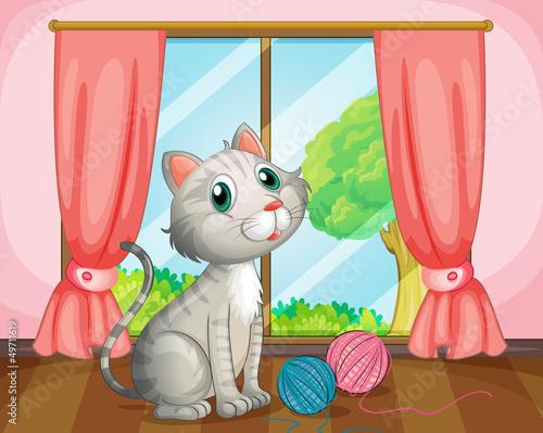 A cat near the window