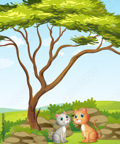 Tuinposter Katten Two cats in the forest