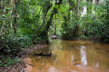 Inside the african rainforest III