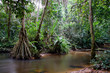 Inside the african rainforest II