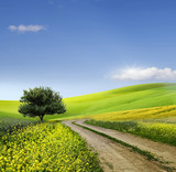 Fototapety Field,tree and blue sky