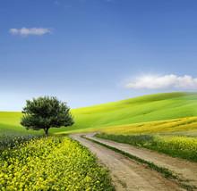 Champ, arbre et ciel bleu