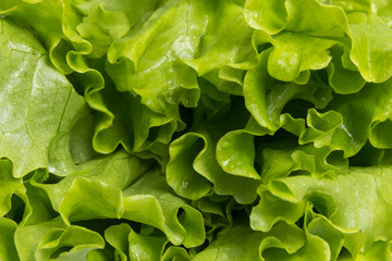 fresh lettuce salad close up