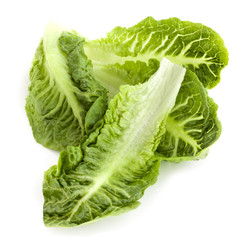 Romaine Lettuce Leaves Isolated