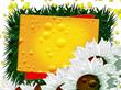 Frame for inscriptions. chamomile flowers