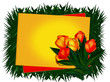 Greeting card. Tulips.