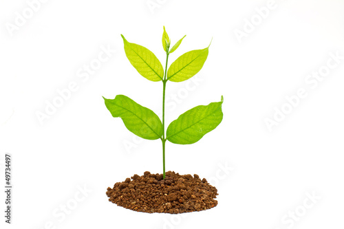 Seedling green plant on a white background