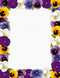 Pansy Flower Frame, Violas, polka dot background, copy space