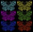 butterflies on a black background