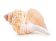 Leinwanddruck Bild - Seashell in close-up isolated on a white