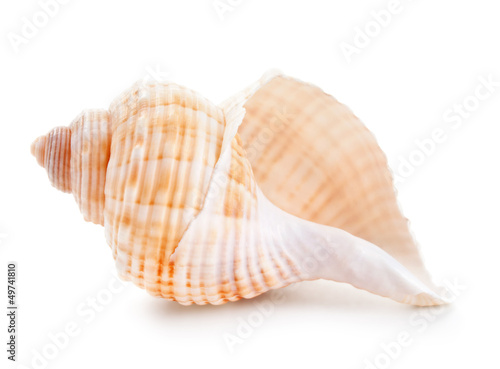 Leinwanddruck Bild Seashell in close-up isolated on a white