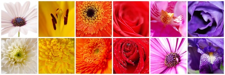 COLLAGE DE 12. COMPOSICIÓN FLORAL EN MACRO