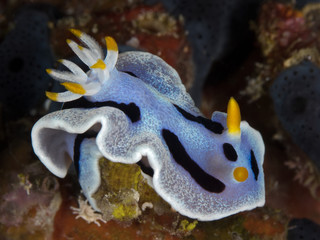 nudibranch on coral