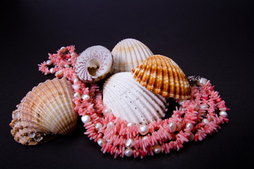 coral beads and seashell