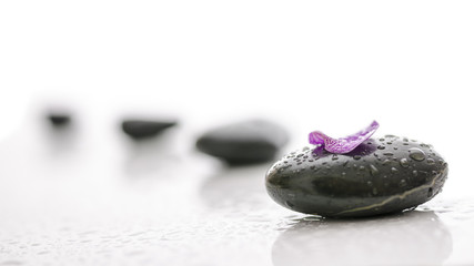 Black pebbles and violet petal with water drops