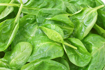 fresh spinach leaves with drops close up