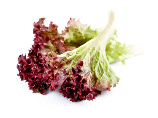 sweet red lettuce