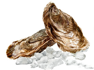 Two oysters with ice cubes