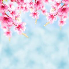 Blauer Hintergrund mit Kirschblüten © Kathleen Rekowski