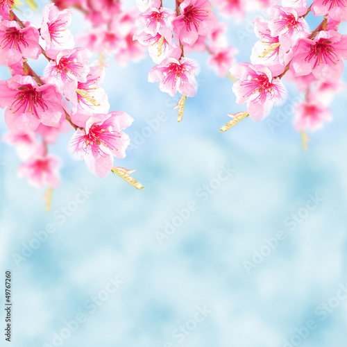 Blauer Hintergrund mit Kirschblüten