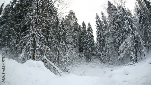 winter  forest  14