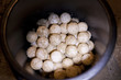 Turtle eggs in a bucket.
