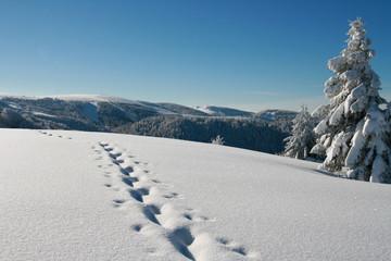 Les Grandes Crêtes des Vosges vues du Haut Gazon