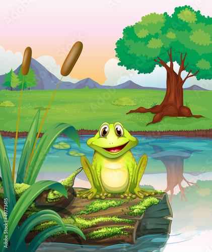 A frog at the lake