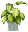 An ornamental plant in a pot