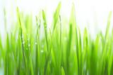 Im sonnigen Dickicht der Gräser
