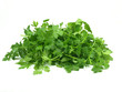 fresh italian parsley on white background