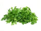 fresh italian parsley on white background