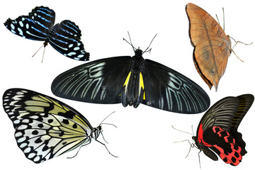 butterflies are insects collection of isolated